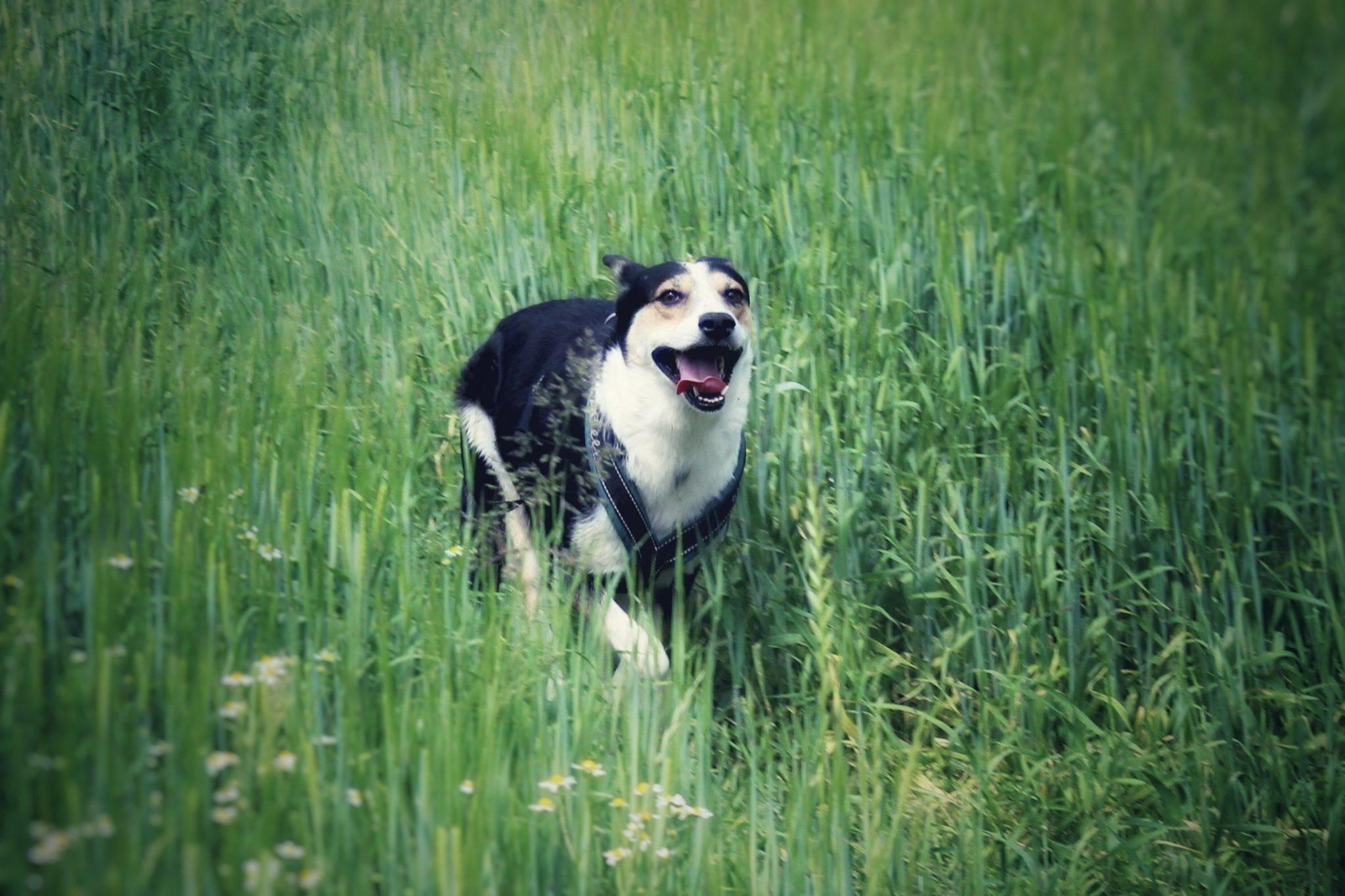 Wie ich auf den Hund kam | Wie es ist einen Auslandshund aufzunehmen