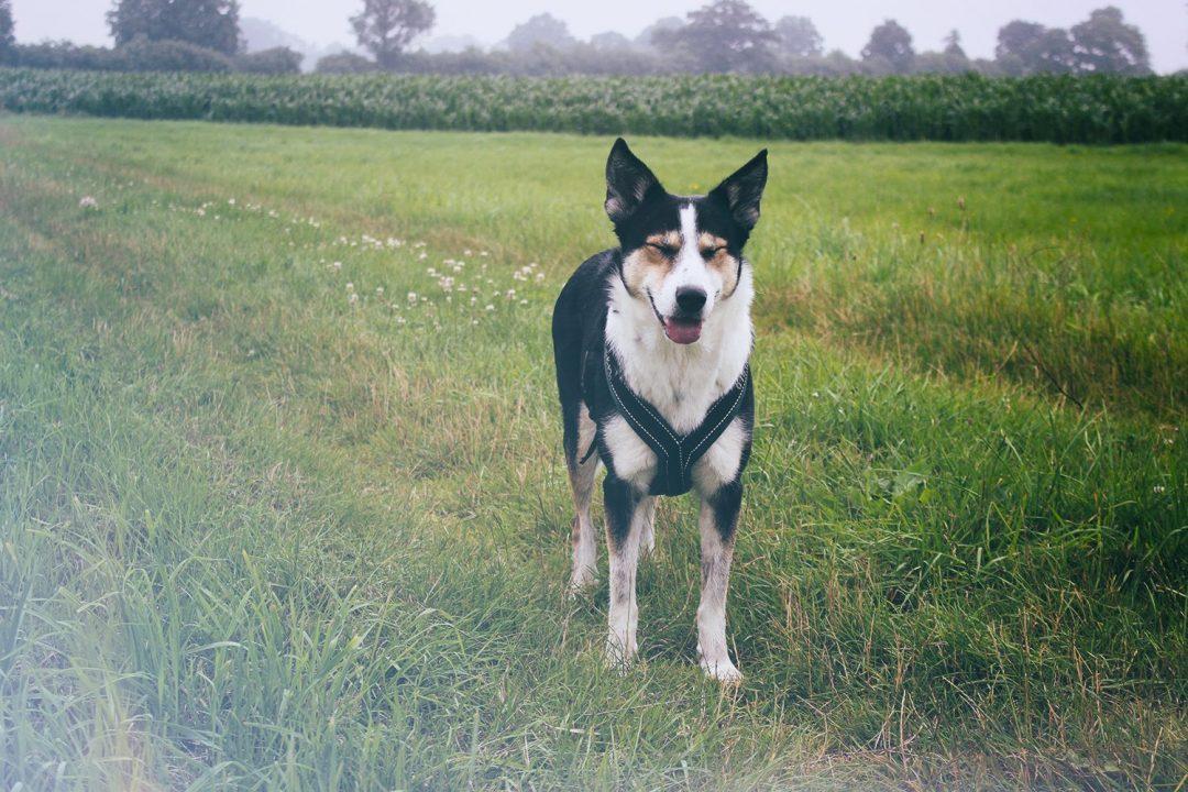 Hund mit zusammengekniffenen Augen auf Wiese bei Regen