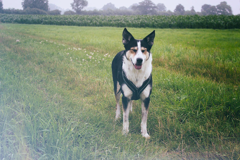 Sundaywalk | Regenspaziergang mit Hund