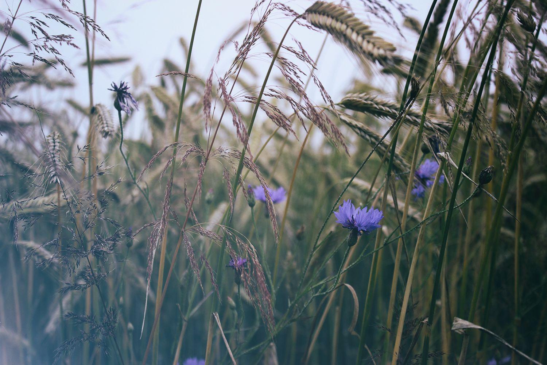 Warum Du auch über psychische Probleme bloggen solltest | Teil 4 – Bella von Filling your mind