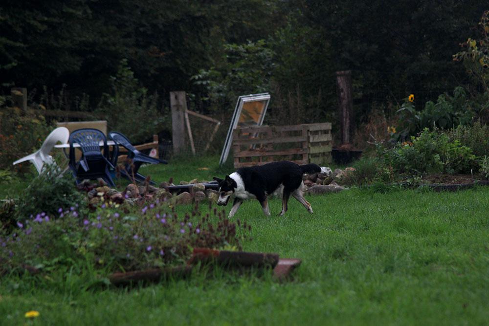 Hund im Schnüffelgarten