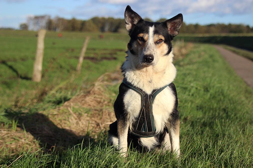 The Mystery Blogger Award | Fragen zu Mensch & Hund