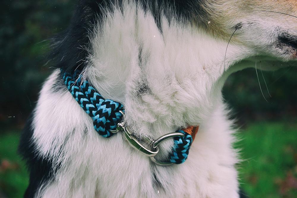 Tauhalsband an Hund