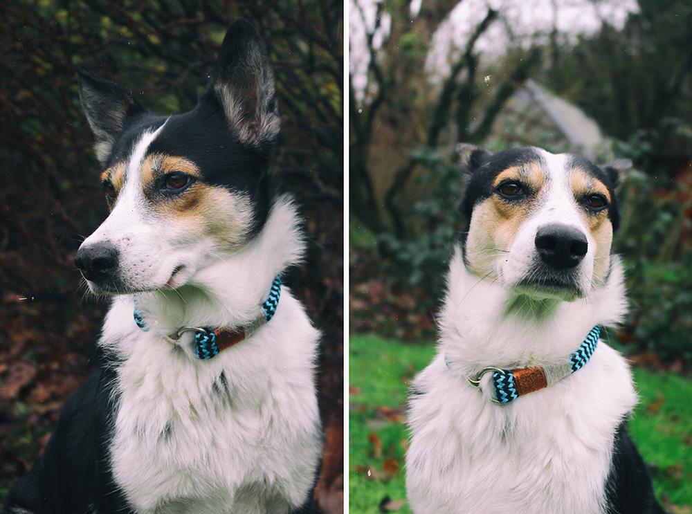 Hund draußen mit DIY Tauhalsband
