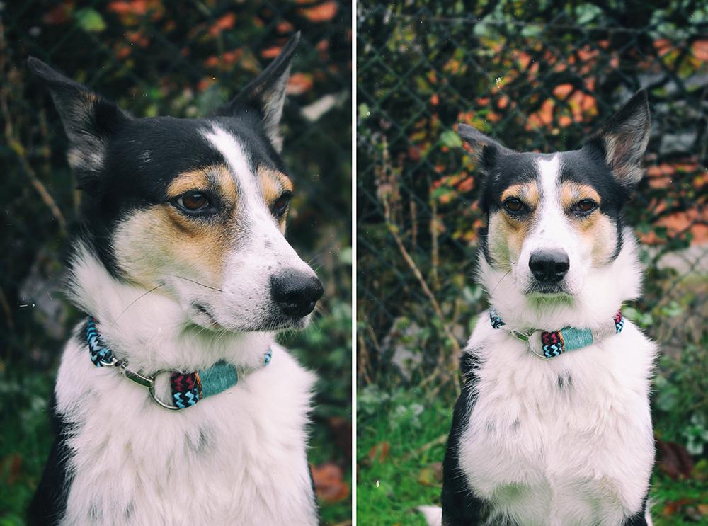 Hund mit DIY Tauhalsband