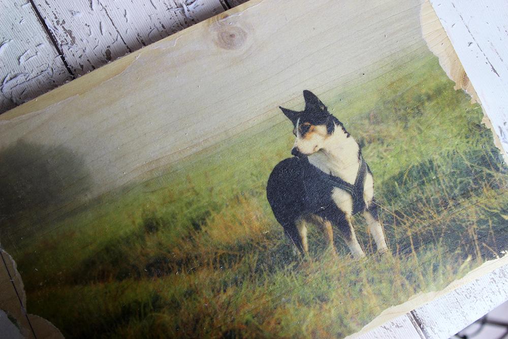 Fotos auf Holz mit Foto Transfer Potch