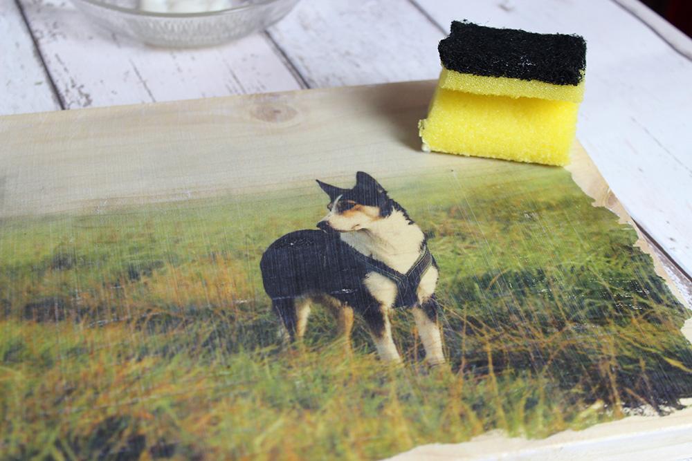 Weihnachts-DIY für Hunde(halter) | Fotos auf Holz
