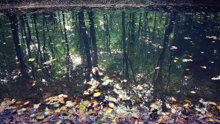 Spiegelung Bäume und Wasser