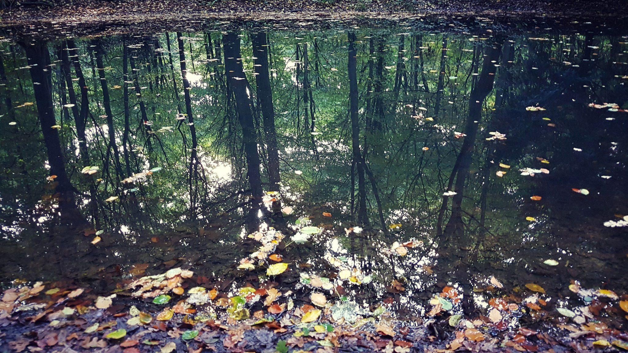 Warum Du auch über psychische Probleme bloggen solltest | Teil 2 – Annika Moon