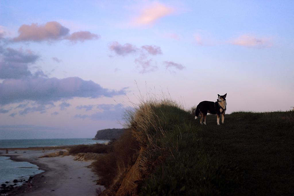 2 Jahre mit Hund | Erlebnisse, Gedanken